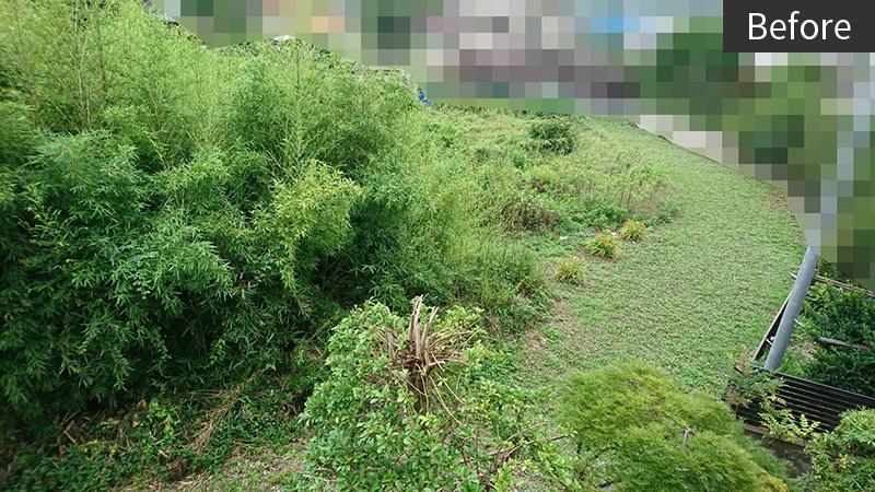 竹と草でどうにもならなくなってしまった元畑before